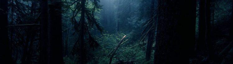 cropped-forest-scene.jpg