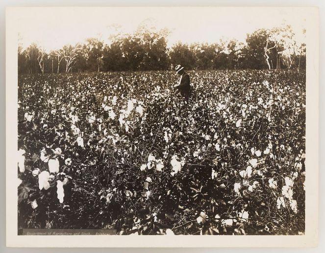 slnsw_920731_series_11_cotton_1923