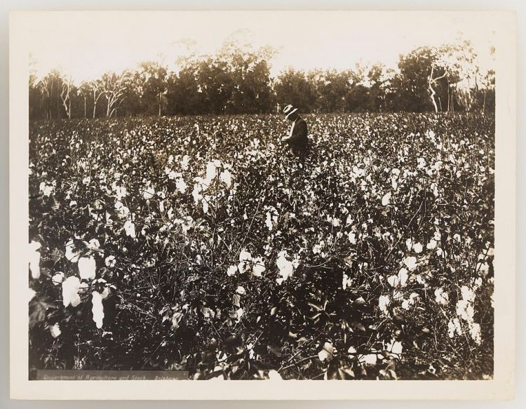 slnsw_920731_series_11_cotton_1923